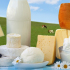 Foodstill with Bio dairy products- cheese and milk